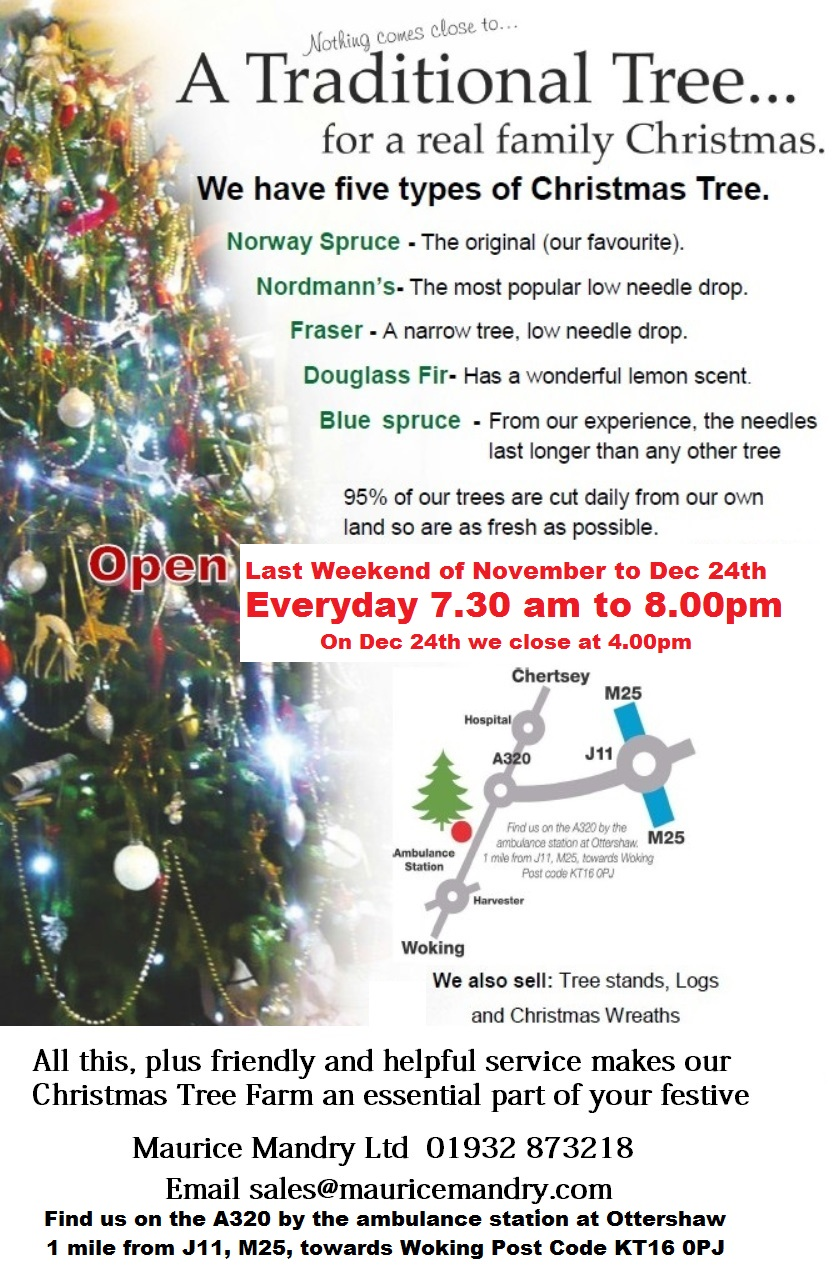 Christmas trees for sale by Maurice Mandry Ltd at Ottershaw near Chertsey Surrey KT16 0PJ