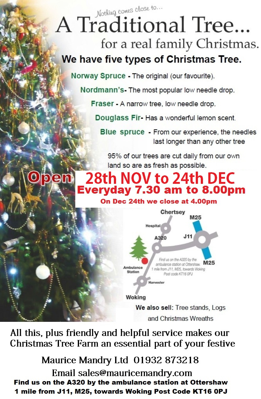 Christmas-trees-for-sale-by-Maurice-Mandry-Ltd-at-Ottershaw-near-Chertsey-Surrey-KT16-0PJ version 1